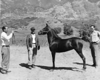 With a horse
