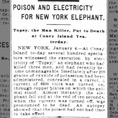 Poison and Electricity for New York Elephant