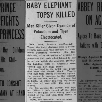 Baby Elephant Topsy Killed