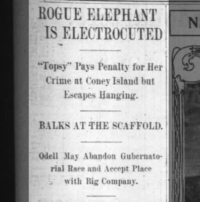 Rogue Elephant Is Electrocuted